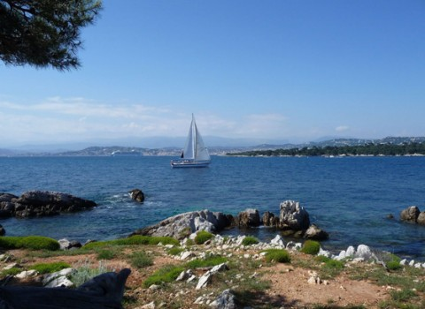 Alpes-Maritimes l Cannes 4