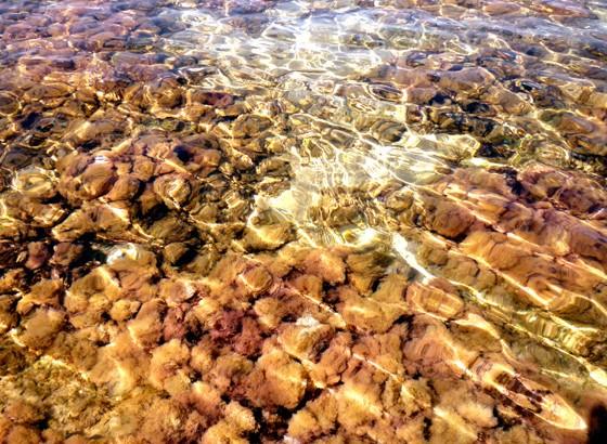 Balade aquatique – Var – Sanary-sur-mer